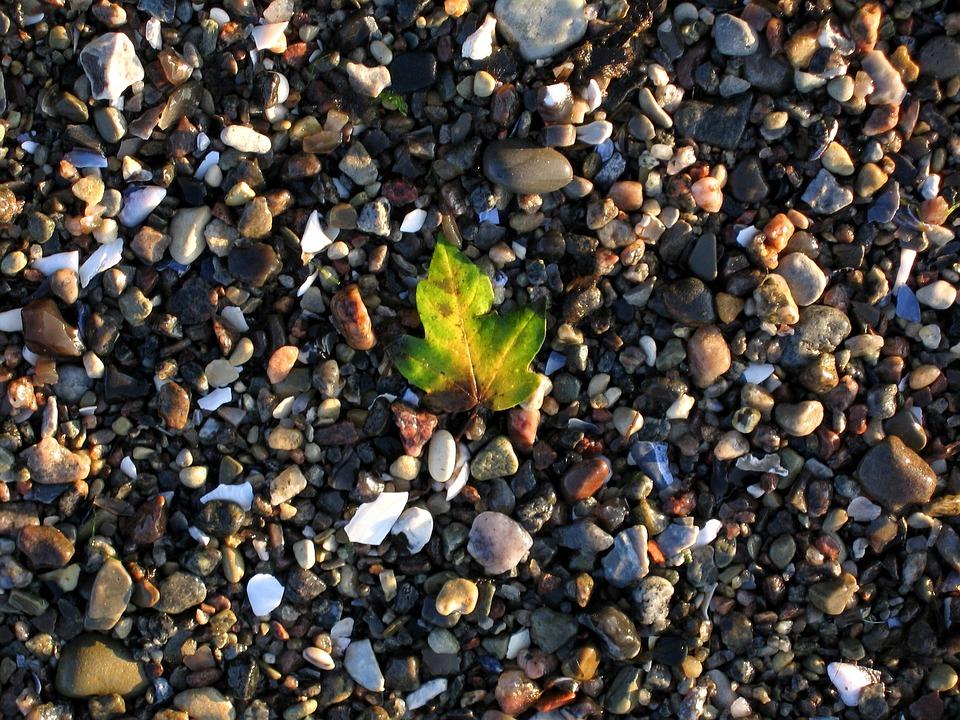 Mood, Atmosphere, Leaf, Beach, Stones, Nature, Water