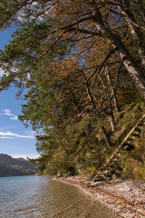 Autumn, Fuschlsee, Tree, Beach, Nature, Water, Bank