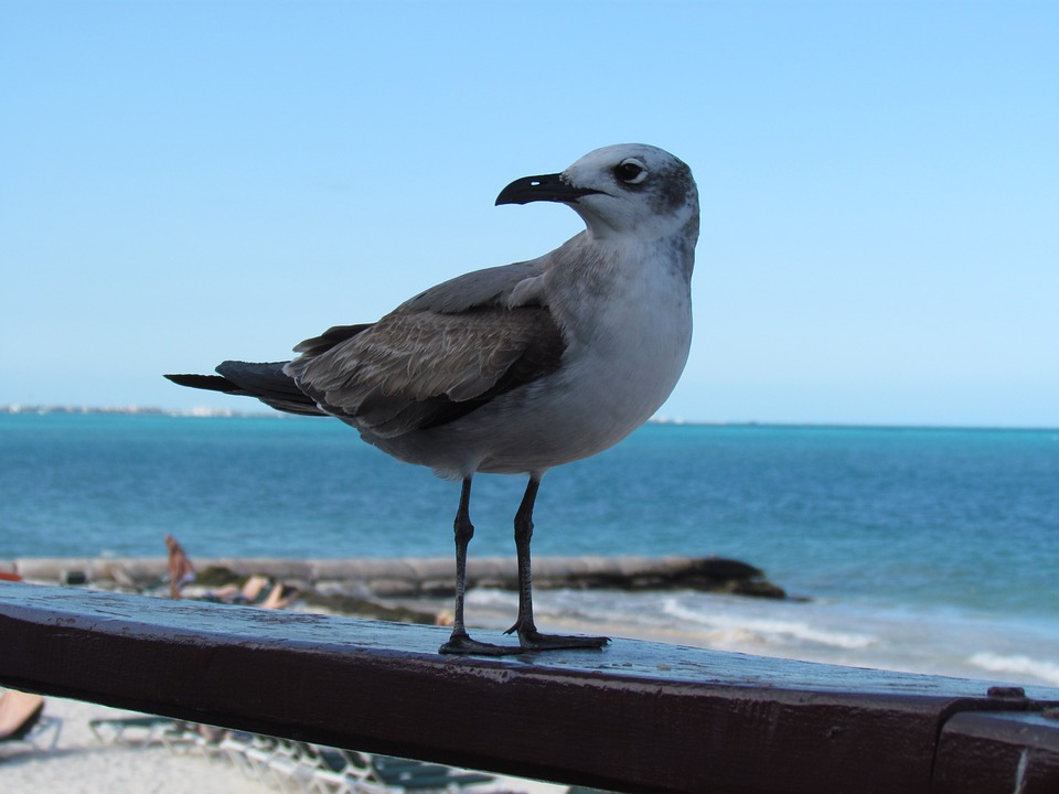 Seagull, Birds, Mar, Beach, Sky, Blue, Litoral, Ocean
