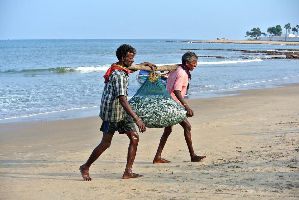 Catch, Fish, Fishermen, Beach, India, Labor, People