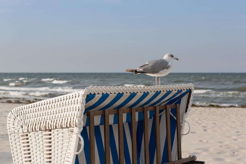 Baltic Sea, Beach Chair, Seagull, Beach, Vacations