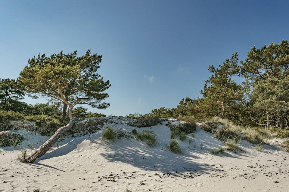 Beach, Baltic Sea, Sea, Vacations, Summer, Coast