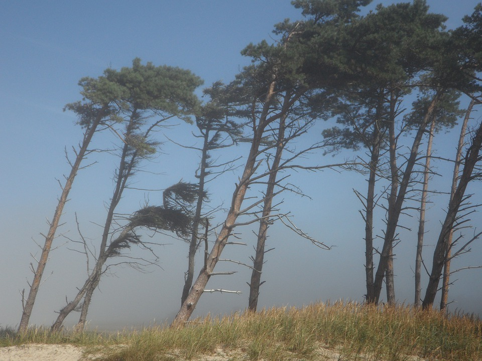 Windfluechter, Wind, Trees, Coast, Beach, Sea