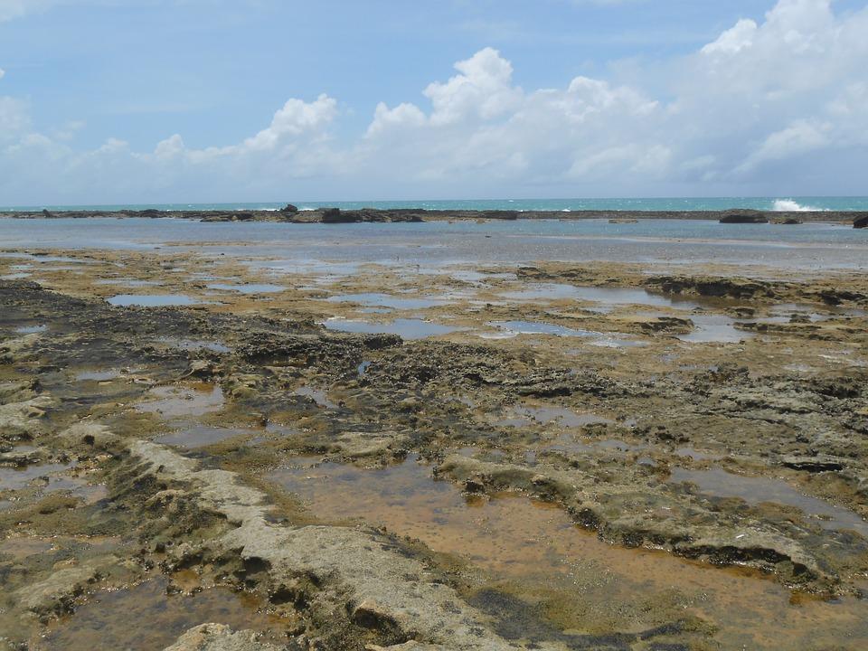 Coral Reef, Stones, Beach