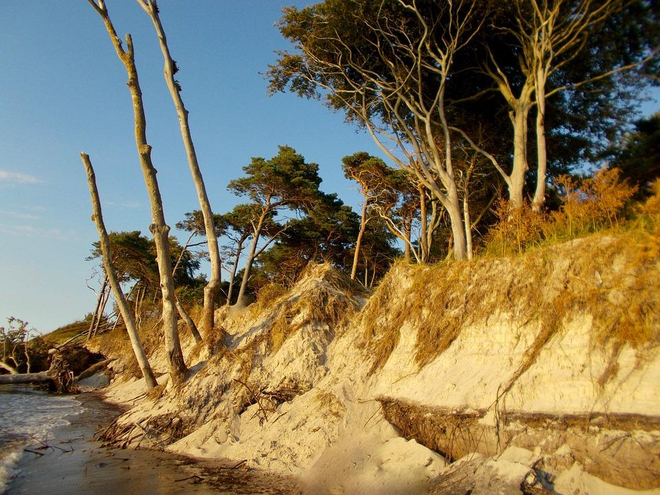 Beach, Sea, Baltic Sea, West Beach, Darß, Windfluechter