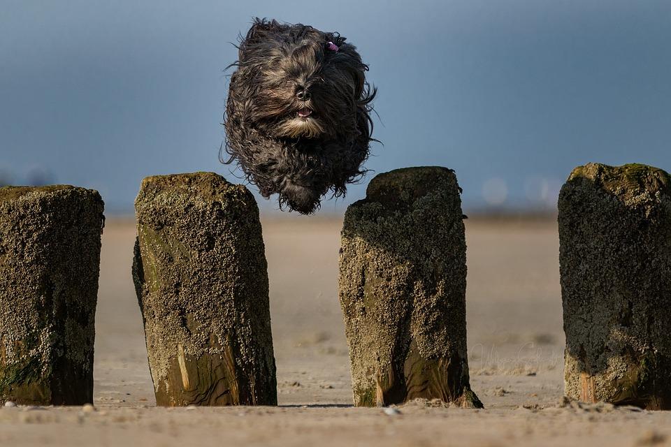 North Sea, Beach, Sea, Nature, Summer, Sand, Dunes, Dog