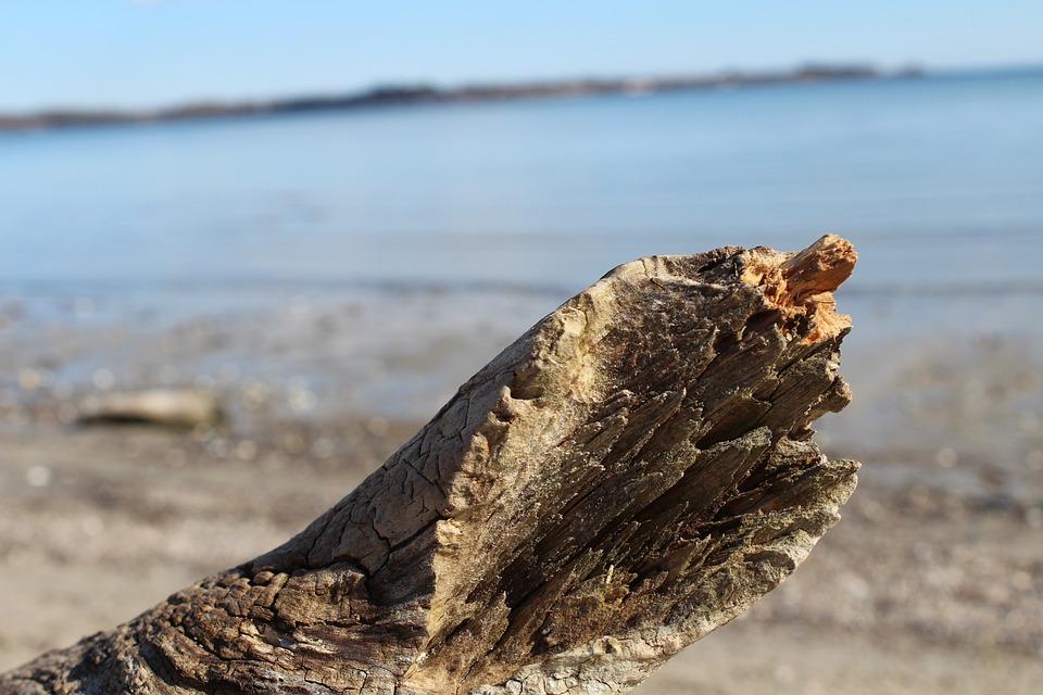 Beach, Baltic Sea, Drift Wood