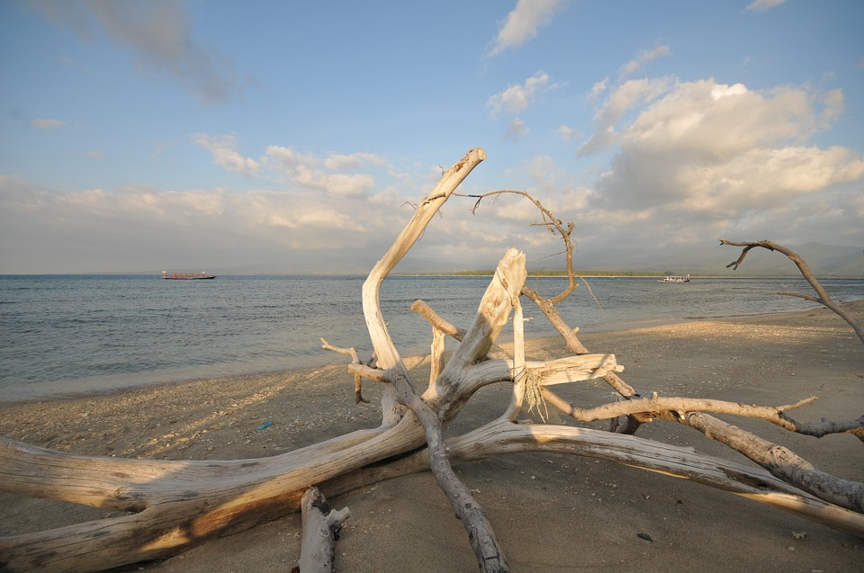 Drift Wood, Beach, Flotsam, Sea, Coast, Driftwood