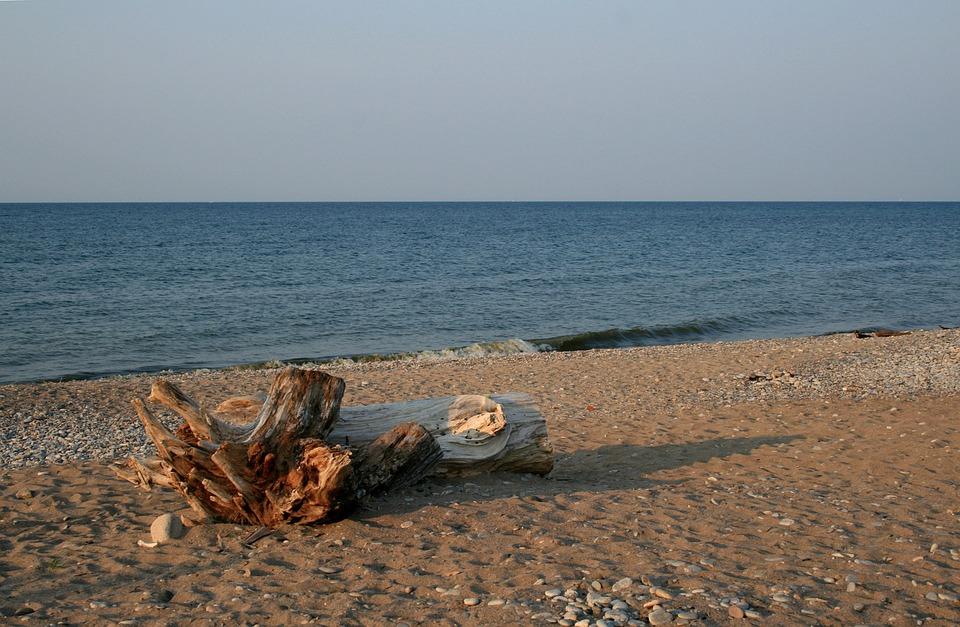 Driftwood, Shore Line, Beach, Sand, Landscape