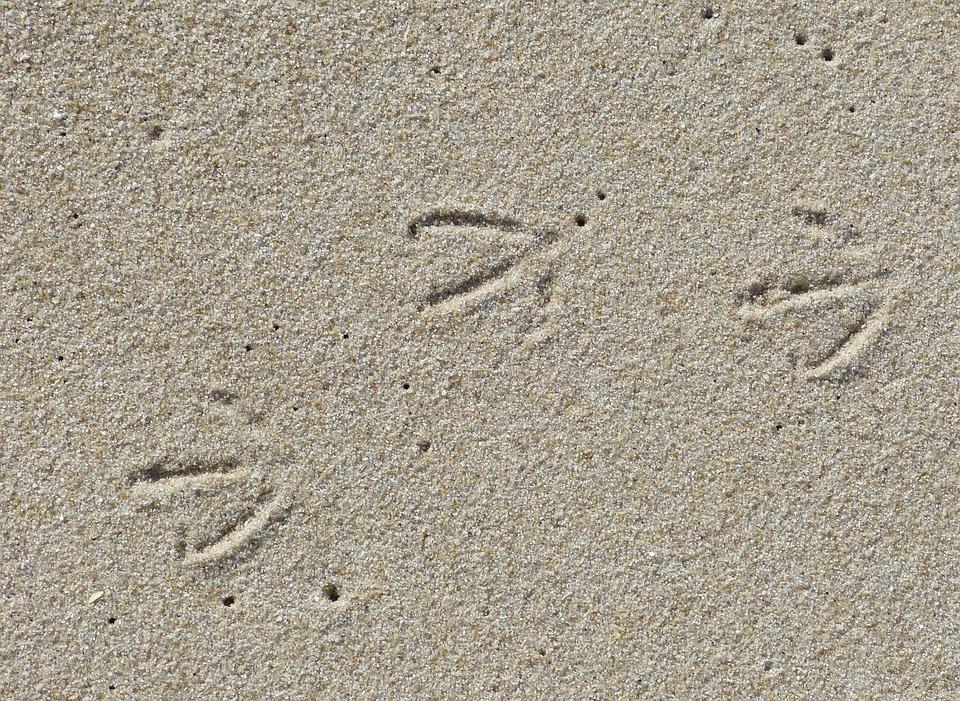 Sylt, List, Elbow, Sea, North Sea, Beach, Island