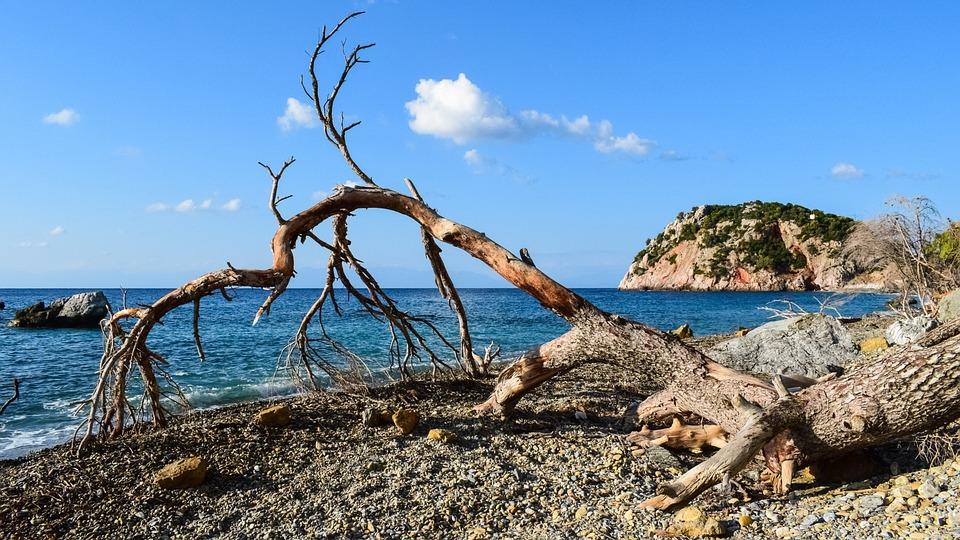 Beach, Wild, Fallen Tree, Empty, Nature, Morning