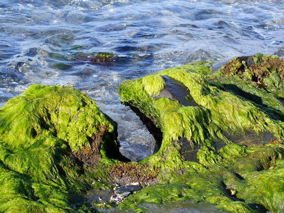 Sea, Beach, Erosion, Algae