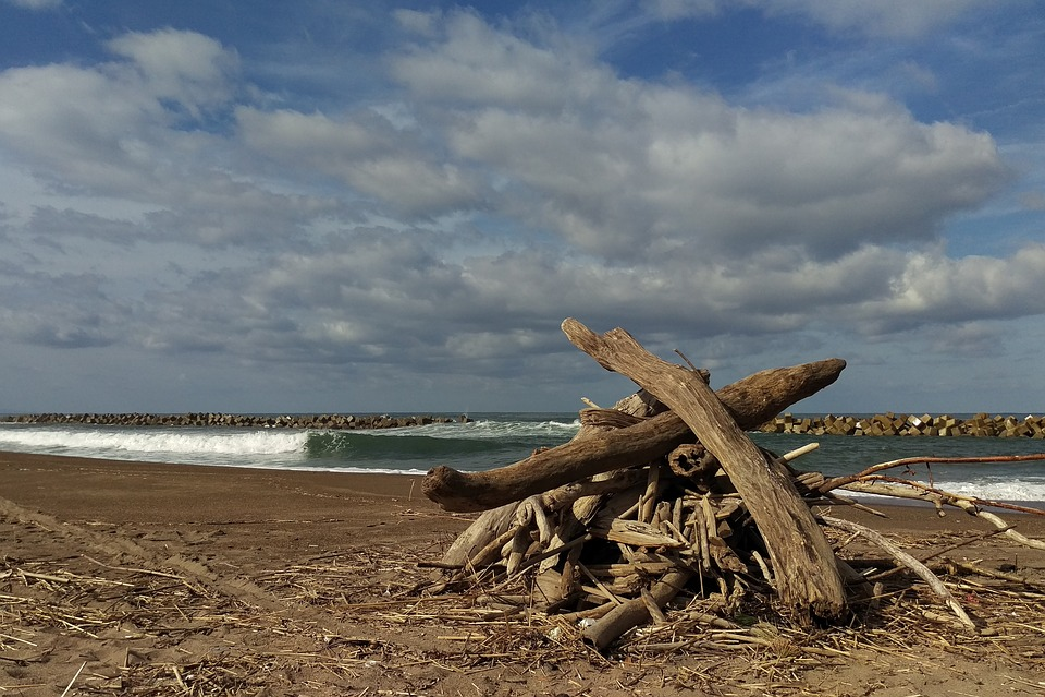 Sky, Cloud, Wind, Sea, Beach, Wood, Driftwood, Firewood