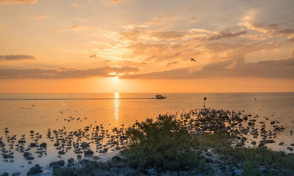 Sunset, Beach, Boat, Florida, Birds, Pine Island