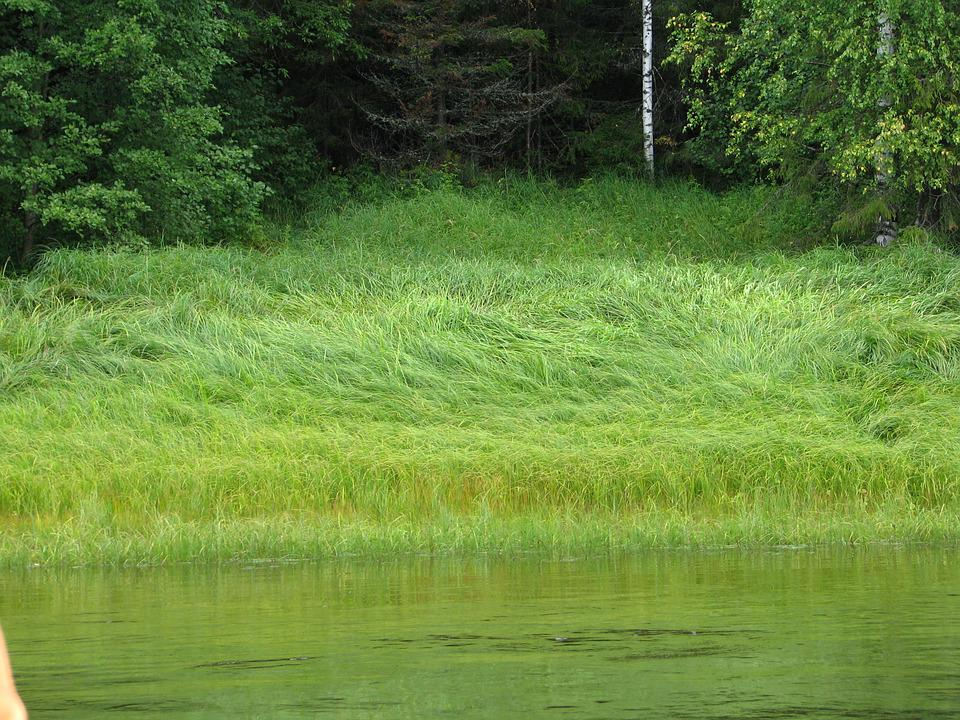 Beach, River, Grass, Forest, Vacation, Nature