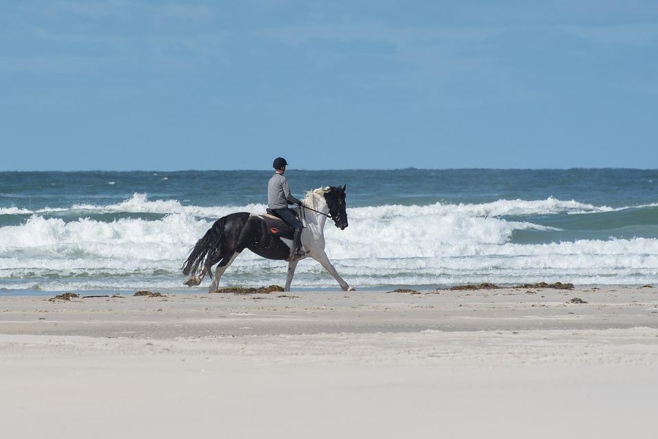 Horse, Beach, Sand, Sea, Water, Coast, Riding