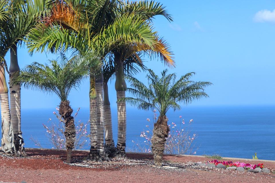 Palms, Beach, Island, Sea, Palm Tree, Holiday, Ocean