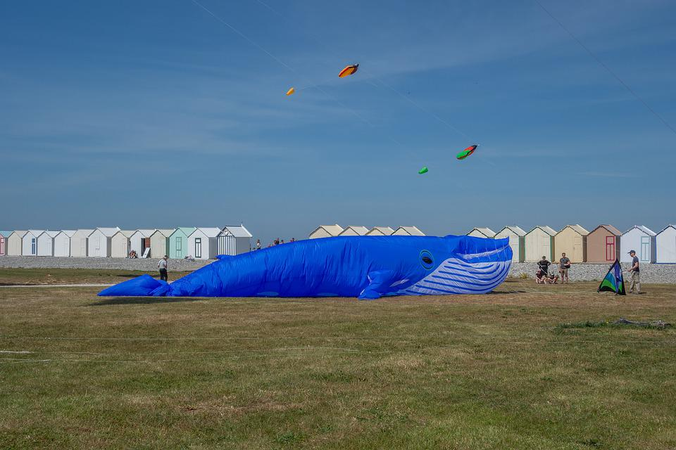 Kite, Festival, Beach, Color, Wind, Sky, Fly