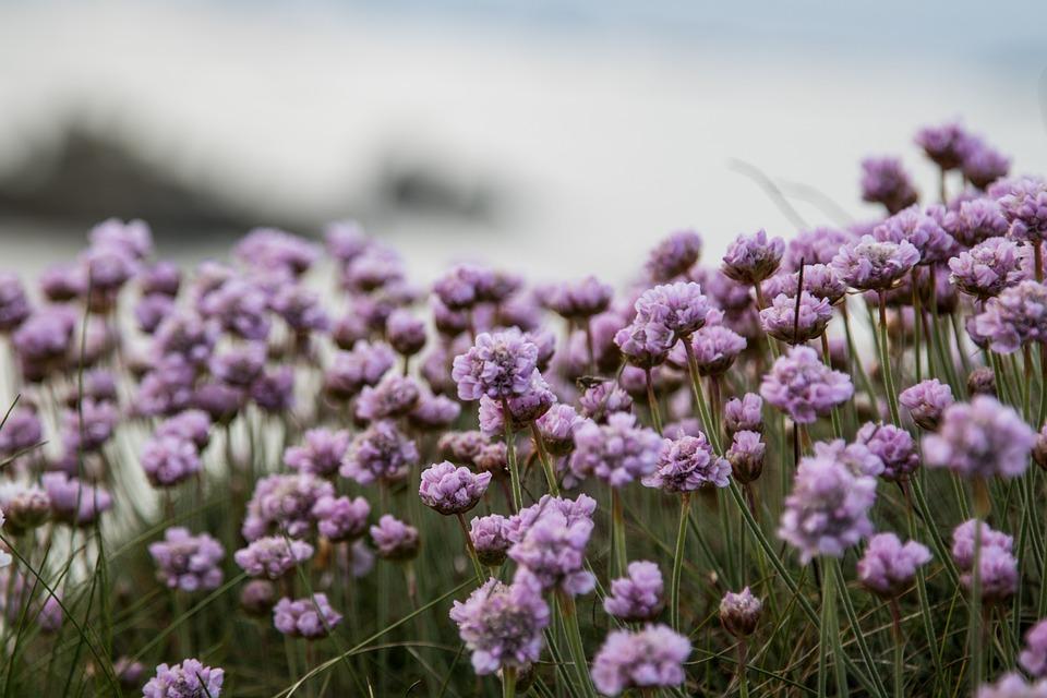 Flower, Coast, Sea, Beach, Landscape, Nature, Summer