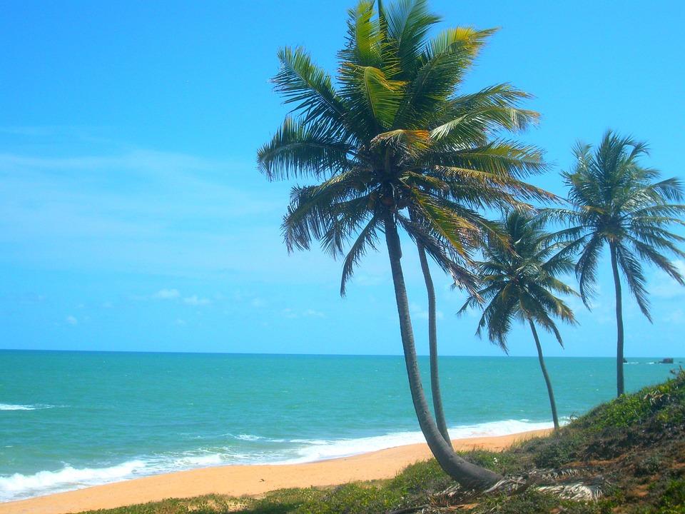 Coconut Trees, Beach, Litoral, Brazil