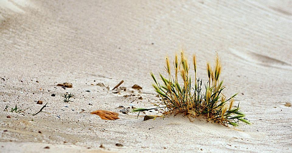 Sand, Beach, Grass, Morocco, Baltic Sea