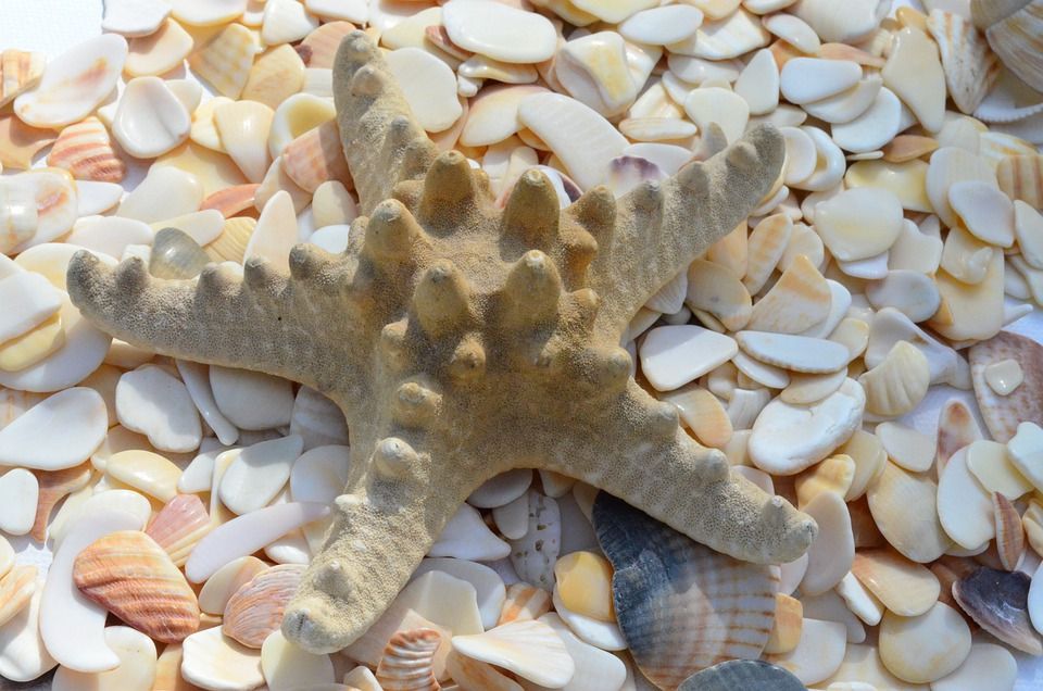 Starfish, Mussels, Mother Of Pearl, Flotsam, Beach, Sea