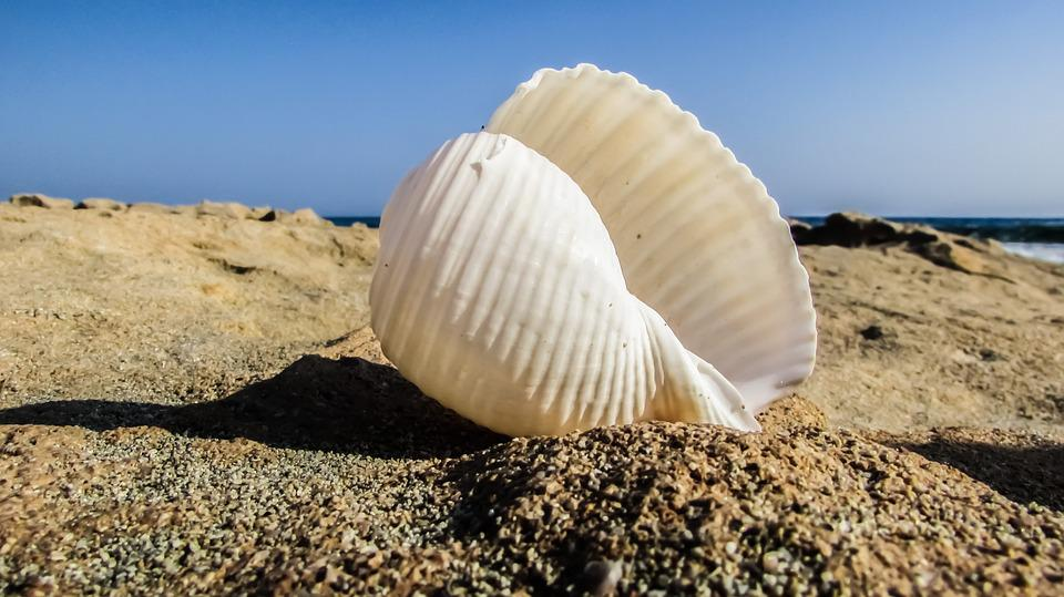 Shell, Beach, Sea, Sand, Summer, Nature
