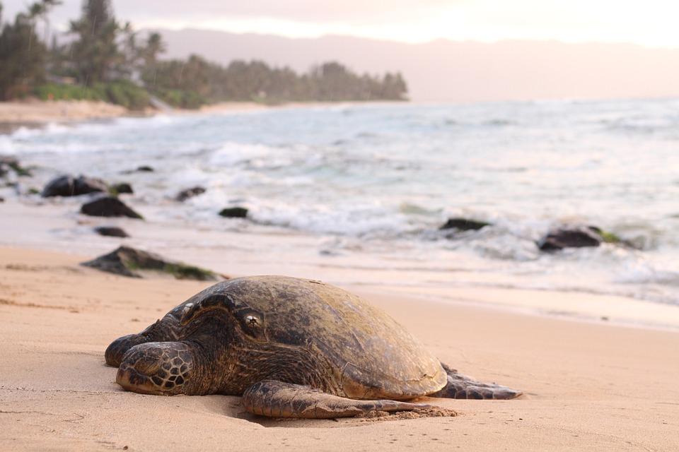 Animal, Beach, Coast, Nature, Ocean, Rocks, Sand, Sea