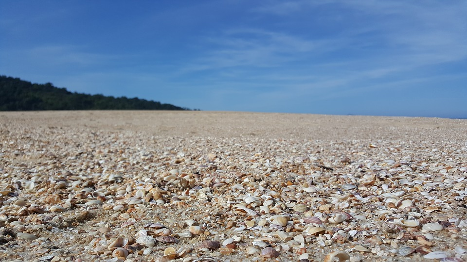 Beach, Mar, Sand, Shell, Spooning, Nature