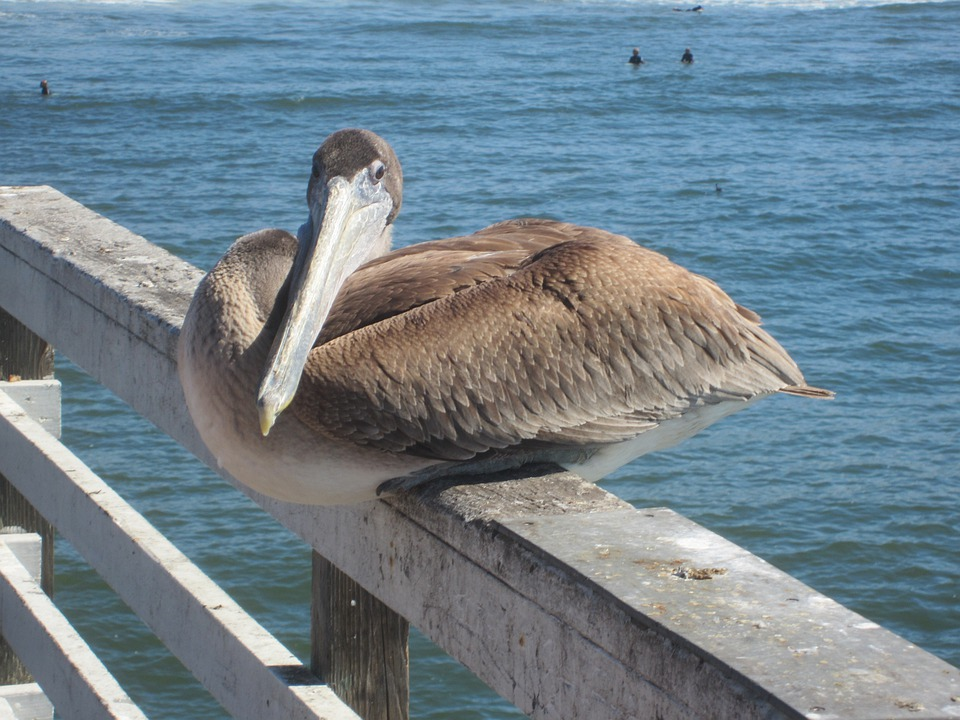 Bird, Ocean, Sea, Animal, Beach, Outside