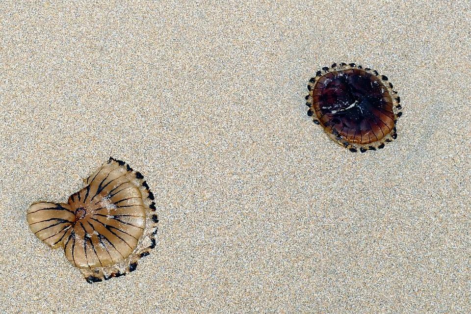 Beach, Jellyfish, Sea, Sand, Nature, Ocean, Life, Water