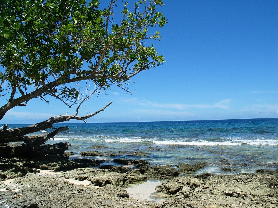 Beach, Sea, Tree, Shore, Coast, Waves, Sky, Blue, Ocean
