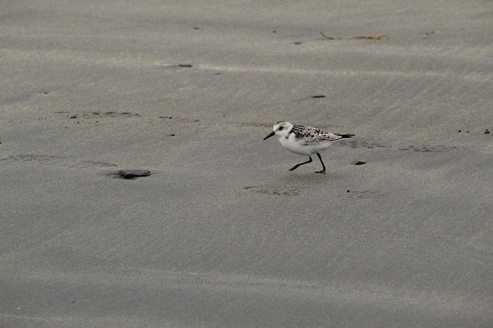 Beach, Bird, Water Bird, Water, Ocean, Animal