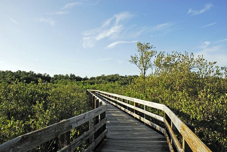 Beach, Pathway, Nature