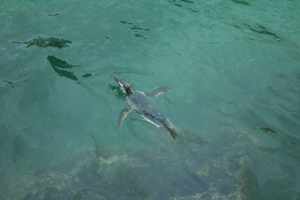 Mar, Beach, Water, Holidays, Summer, Tropical, Penguin