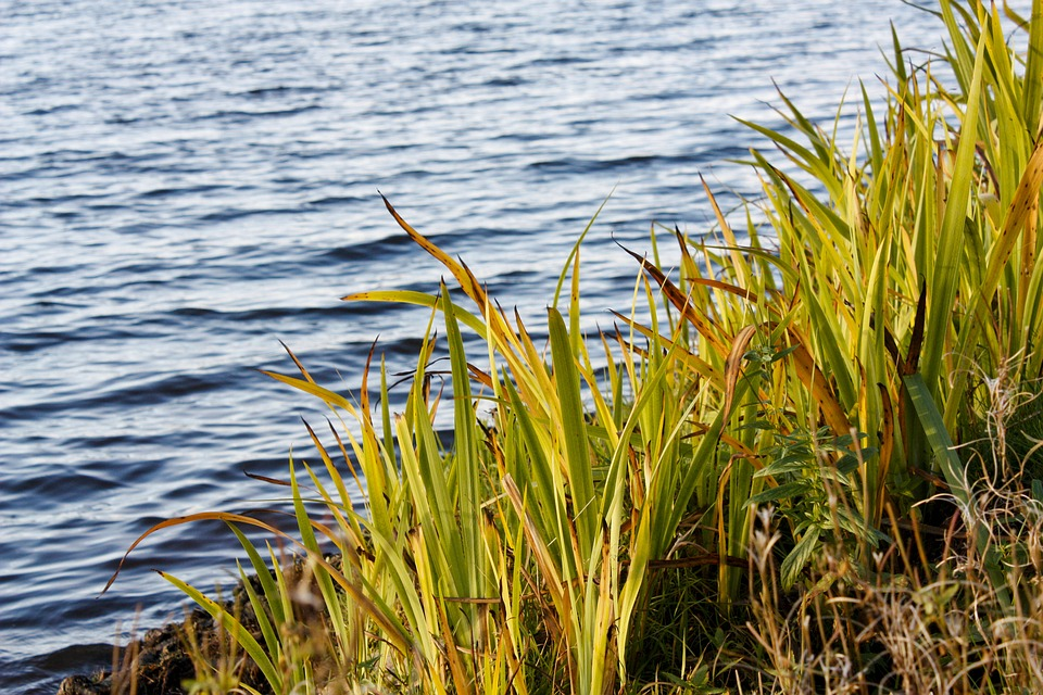 Water, Beach, Hay, Grass, River, Lake, Plant, Nature