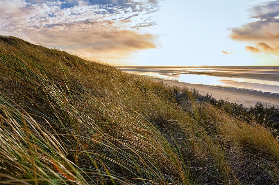 Beach, Coast, Grass, Wind, Nature, Relaxation, Sunset