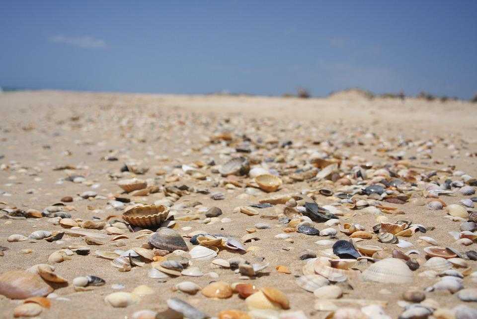 Sand, Beach, Nature, Coast, Sea, Mussels, Holiday