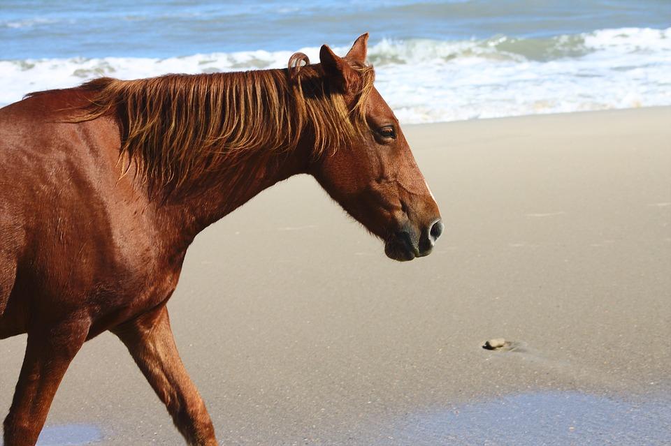 Horse, Beach, Happiness, Sand, Sun, Nature, Animal