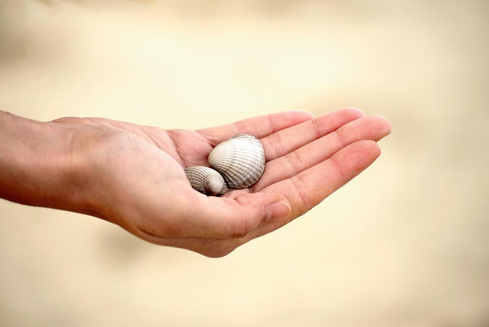 Hand, Mussels, Keep, Sand, Beach, Summer, Vacations
