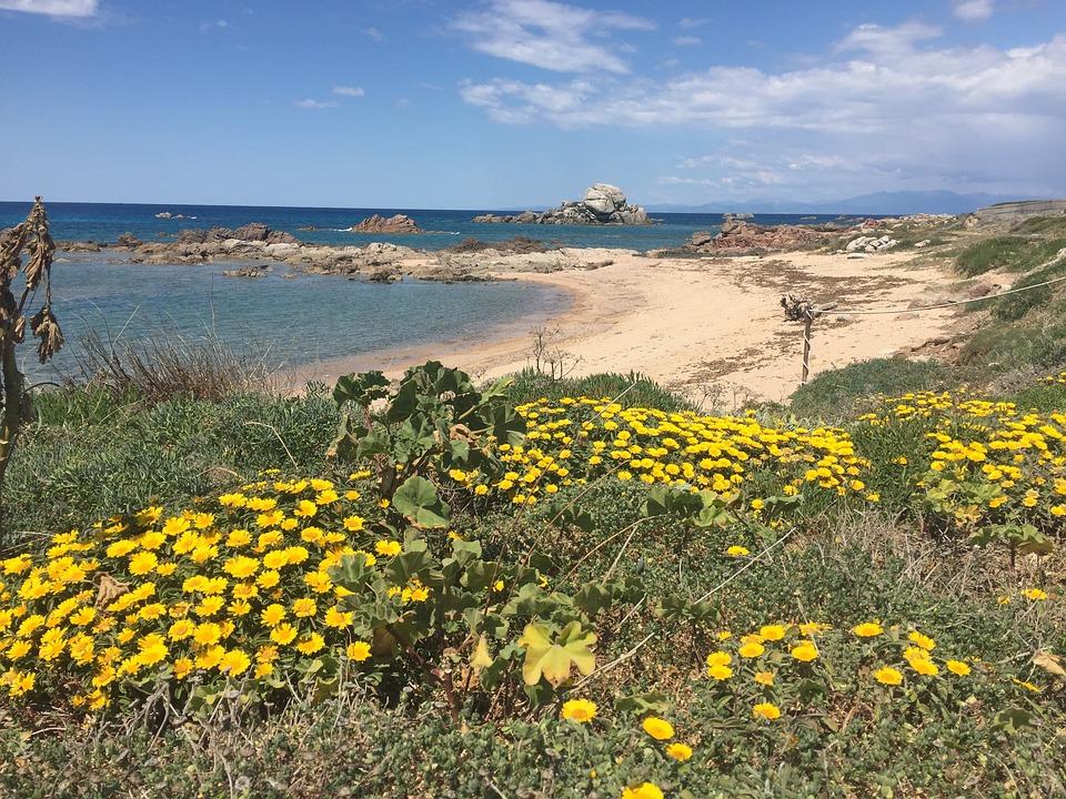 Flowers, Beach, Sardinia