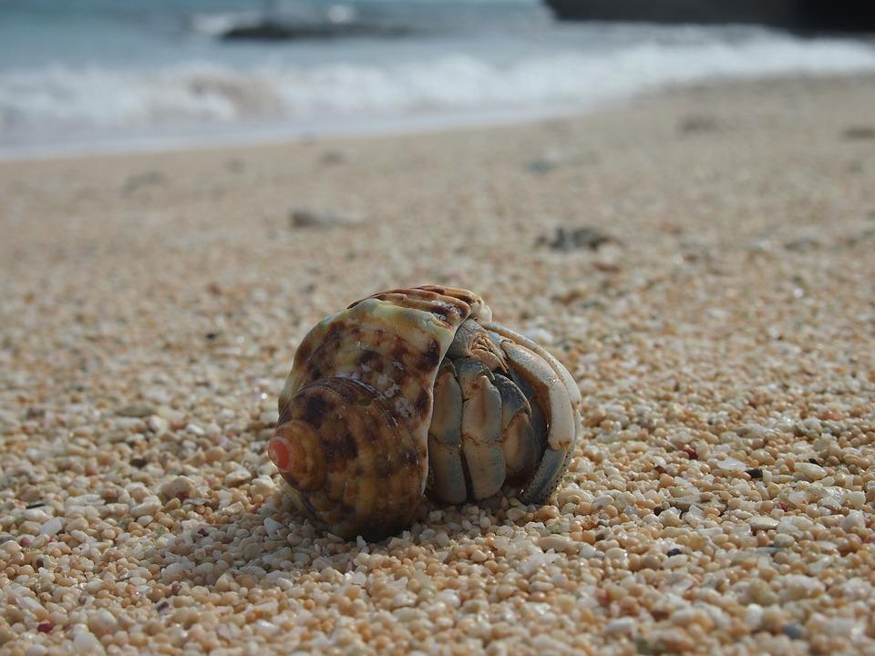 Hermit Crab, Yoron, Crab, Sea, Beach