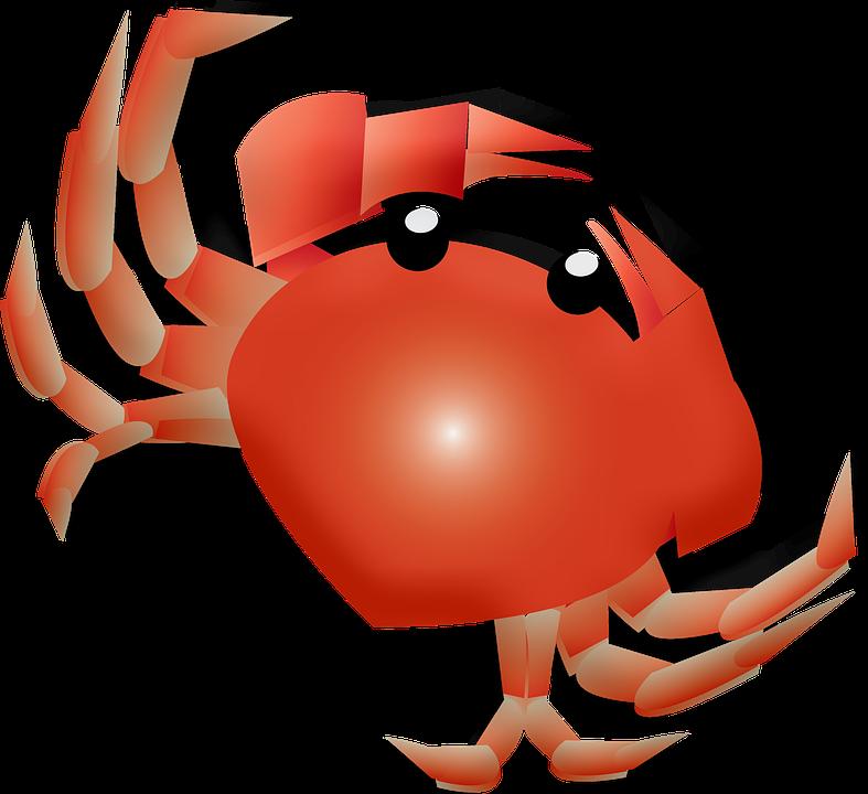 Crab, Beach, Ocean, Sea, Sand, Summer, Water, Nature