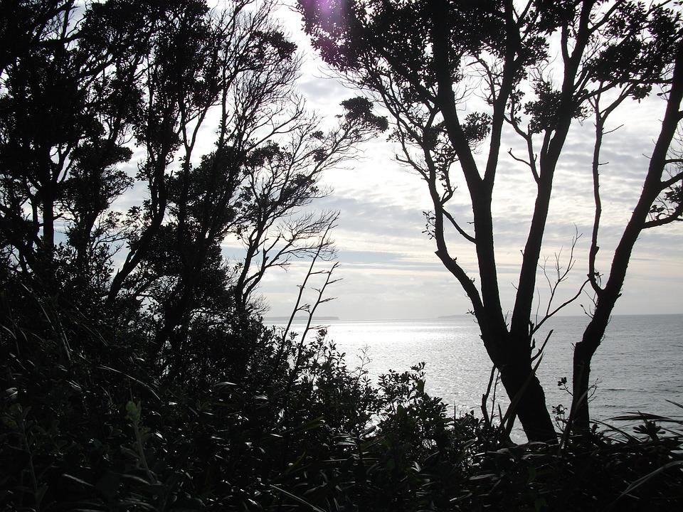 Trees, Ocean, Sea, Beach, Water, Sky, Landscape, Coast