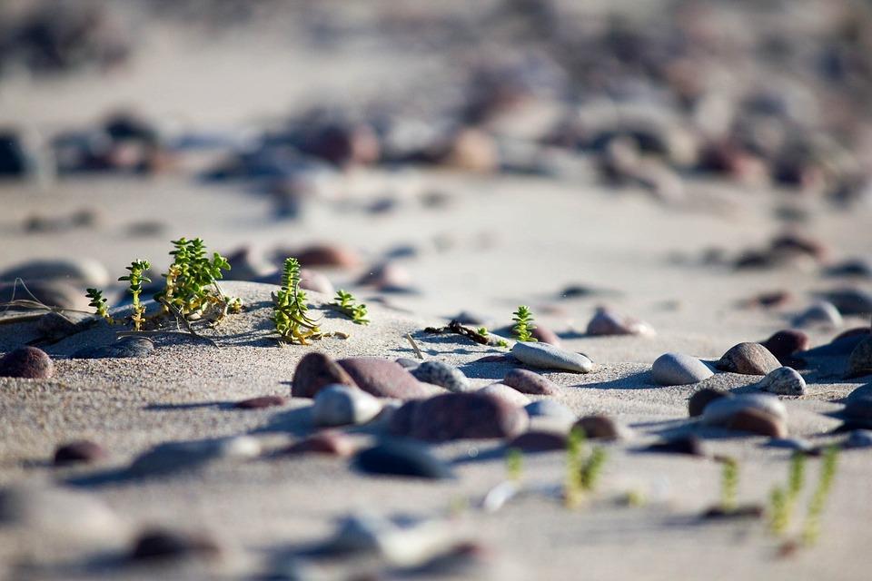 Sand, Nature, Beach, Outdoors, Bird, Seashore