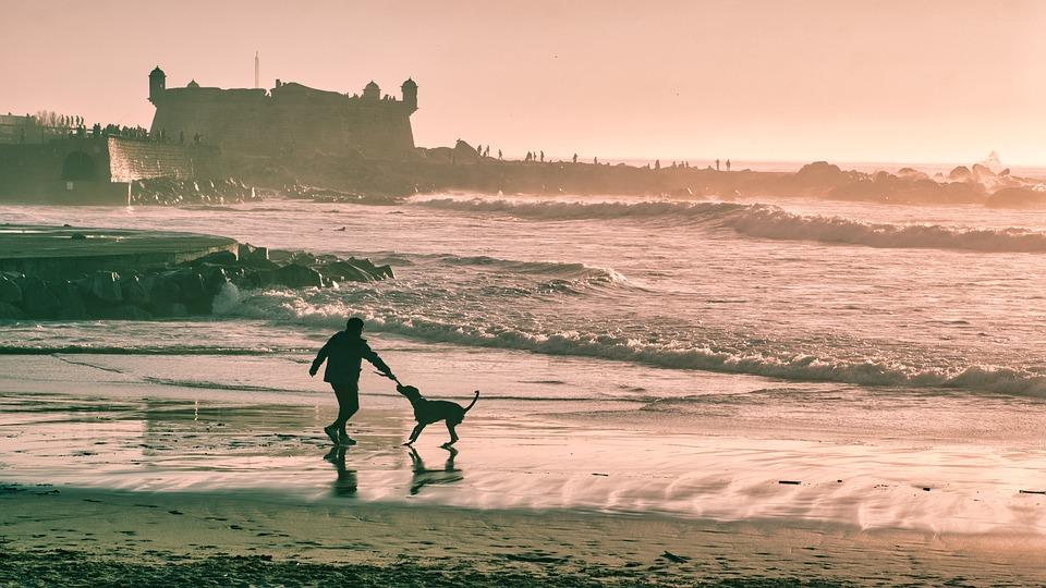 Beach, Man, Dog, Silhouette, Castle, Happy, Pet, Play