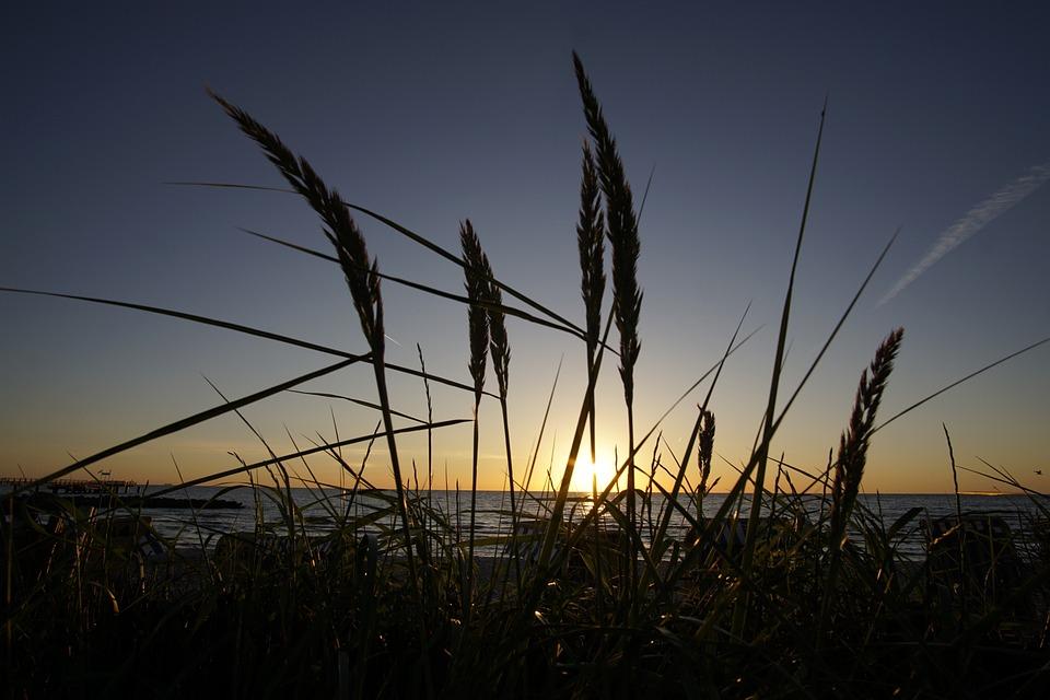 Sunrise, Marram Grass, Sun, Summer, Beach, Sky, Water