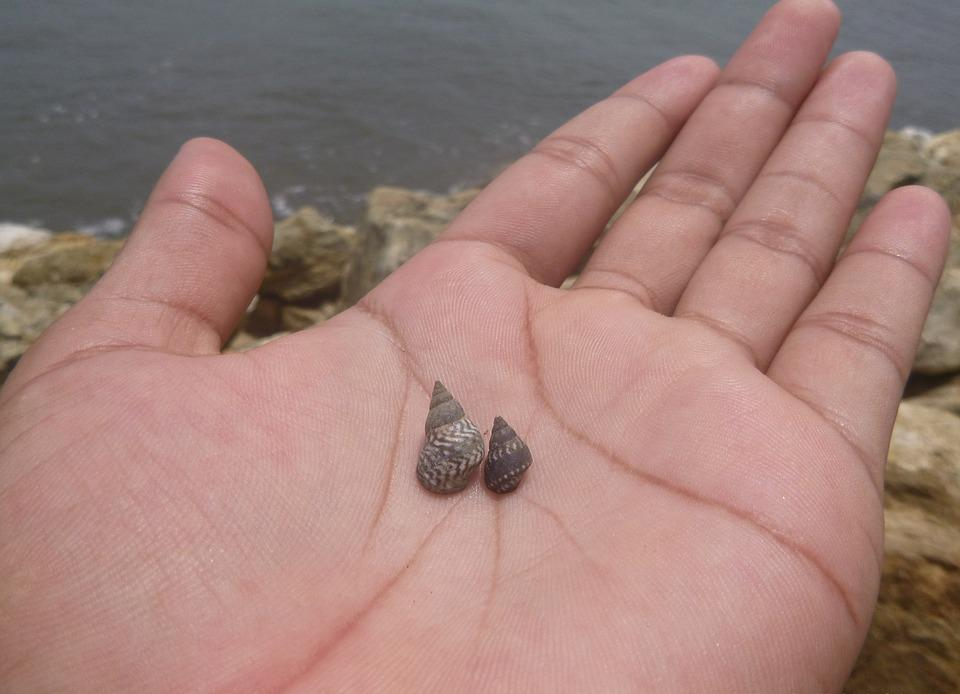 Hand, Snail, Beach, Sea, Snails, Small, Sand, Tender