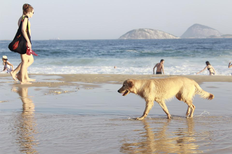 Summer, Beach, Sol, Dog, People