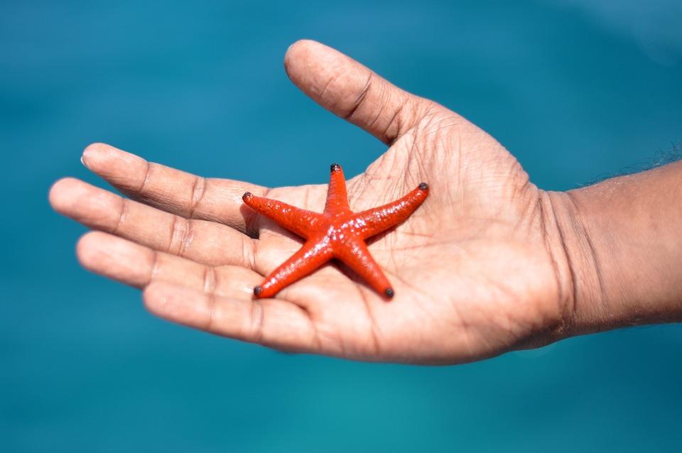 Starfish, Hand, Animal, Aquatic, Beach